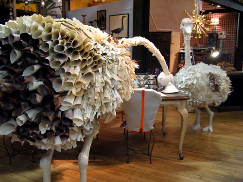 Anthropologie Ostriches