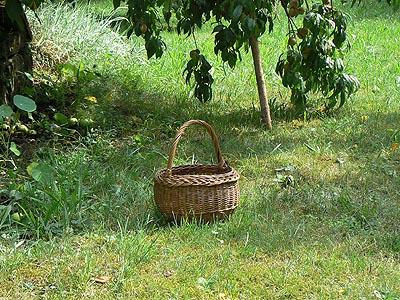 panier dans le jardin.jpg