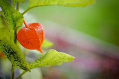 Flower-thingy (Henning_Christensen) Tags: red flower green nature nice nikon awesome stuff blomst grimstad nikond300 norwaynikond300blomstgrimstadnaturstuff