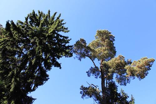 Medžiai ant Kartuvių kalno