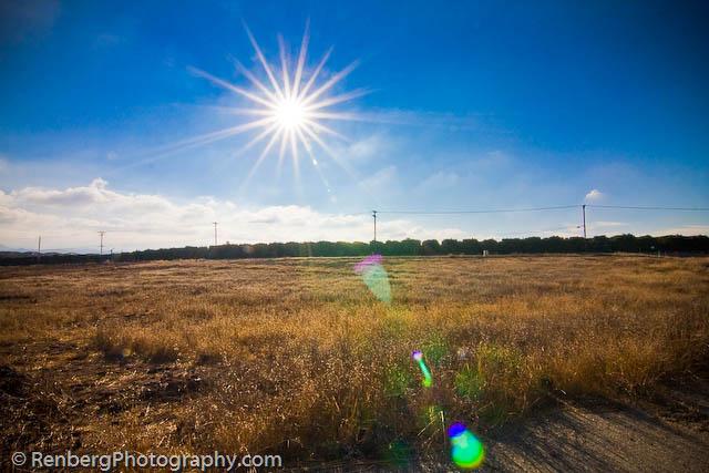 RenbergPhoto 10-16-09 Orange Groves -2