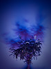 Bonsai self-portrait (the_lighter) Tags: blue light selfportrait tree painting nikon shadows blu ombre bonsai albero luce dipinto psichedelica