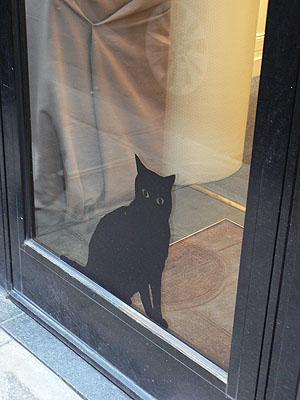 vitrine chat.jpg