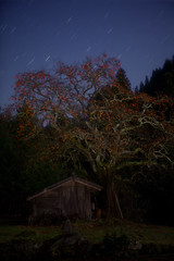 Star Pasimon()and Old barn (masahiro miyasaka) Tags: autumn japan night barn canon stars star astrophotography lonelytree oneshot  startrail earthandsky eos5dmark pasimon