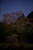 Star Pasimon(星柿) and Old barn (masahiro miyasaka) Tags: autumn japan night barn canon stars star astrophotography lonelytree oneshot 夜 startrail earthandsky eos5dmarkⅱ pasimon