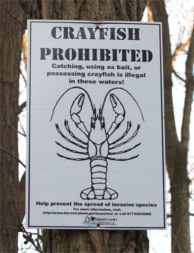 CrayfishProhibited