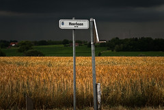 The brightside of life (Tine Lemaitre) Tags: landscape agriculture distillery landschap thebrightsideoflife
