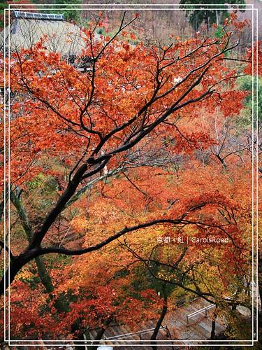 2009-12-11 京都 009 R