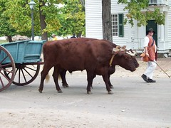 047 (yellerhammer) Tags: williamsburg oxen