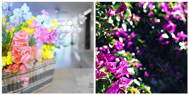Flores Artificiales- Flores Naturales
