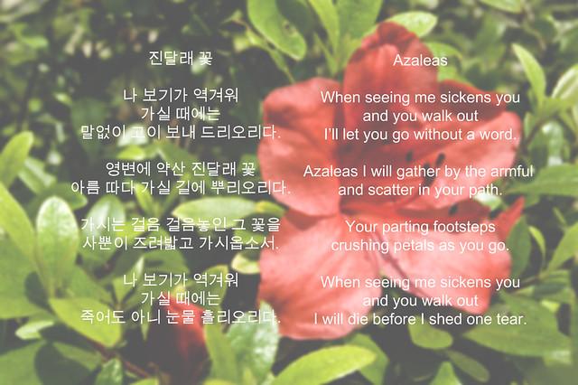 Korean Azalea K Paper