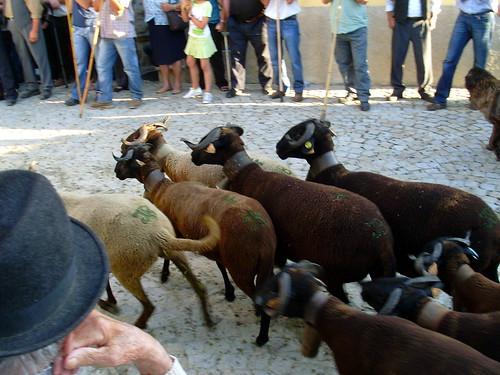 O S. João das ovelhas