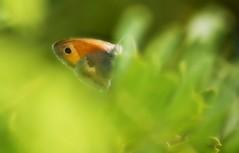 Lost in a dream ... (Lookaloopy) Tags: plants green canon butterfly bokeh smooth dream sigma dreamy farfalla silky sogno 70300 sfocato nascosta eos450d
