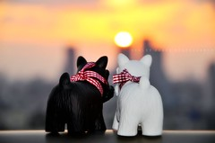 Gazing at the sunset (Violet Kashi) Tags: sunset dogs toys nikon cityscape explore frontpage kashi scottishterrier d90