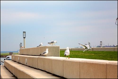 Cleveland Birds von maxherrchen.