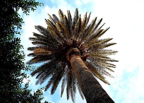 Ombrello ... tropicale
