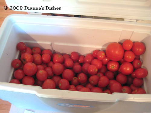 CSA Week 15: 40 Pounds Of Tomatoes