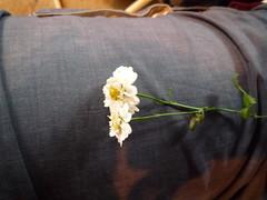 Mutterkraut (1) (Pamela&Johannes) Tags: august 2009 kräuter badzell mutterkraut hedwigsgartl
