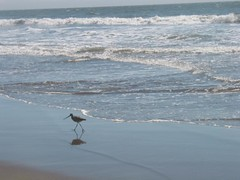 Stinson Beach Bird