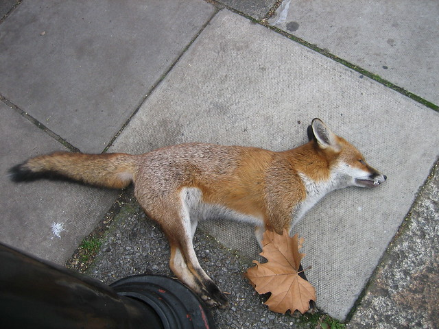 London, UK - Christmas & Dead Fox