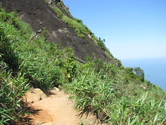 IMG_8558.JPG (amadeujr) Tags: brazil nature rio brasil forest barradatijuca floresta ilha tracking trilhas tijuca pedradagavea gaveastone