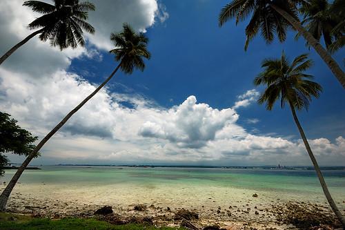 Samal Noon Palms