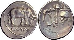 443-01-09214-37-CAESAR Julius Caesar Spain mint 49BC  Elephant snake Simpulum sprinkler axe apex Denarius