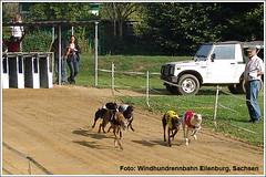 Greyhounds auf der Windhundrennbahn Eilenburg