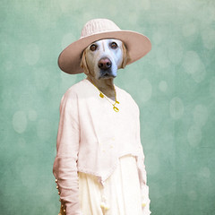 The undecisive - l'indcise (Martine Roch) Tags: pink blue fiction portrait woman dog pet texture love hat animal lady vintage costume labrador surreal surrealist elegant manray boudi petitechose martineroch thelittledoglaughed flypapertextures