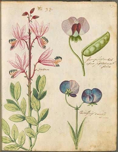 Hortulus Monheimensis 00069