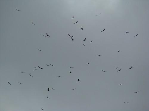 Rapaces en migración, Torre Kekoldi