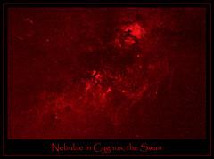 Nebulae in Cygnus, the Swan (gainesp2003) Tags: sky stars space science filter nebula astrophotography astronomy alpha hydrogen cygnus nebulas nebulae ngc7000 ic5070 northamericannebula veilnebula ngc6960 ngc6888 ic1318 crescentnebula pelicannebula Astrometrydotnet:status=solved Astrometrydotnet:version=13287 Astrometrydotnet:id=alpha20091002688092