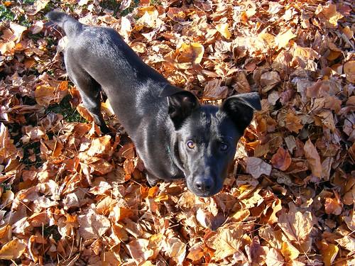 Ziggy Bear in Leaves