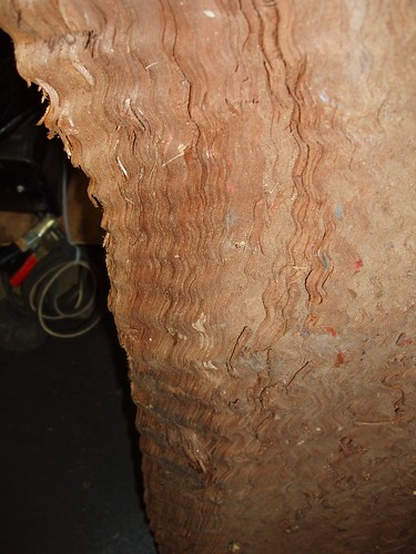 Wiggle Redwood 03