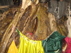 The tree cave from where Nagar supervises the pooja every now and then (by Raju's Temple Visits)