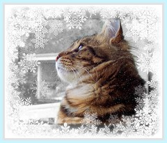 Wishing All Our Flickr Friends A Wonderful Holiday Season .... (FurBabyLuv *Finally back Online) Tags: snow window cat snowflakes kitten picnik edit