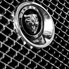 Jag (ROB KNIGHT photography) Tags: bw monochrome car emblem mono blackwhite monochromatic chrome jaguar grille robknight canoneos5dmkii axeman3uk robknightphotography canon24105mmefslseries