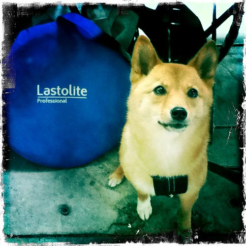 taro shiba poses with lastolite equipment