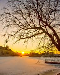 Golden Twilight (Richard Cartawick) Tags: dusk twilight sunset sunsetlight sunsets sunlight sunflare sun solar poland polishwinter winter winterwonderland winterscene wroclaw easterneurope europe outdoors ice frozen freezing freeze nature