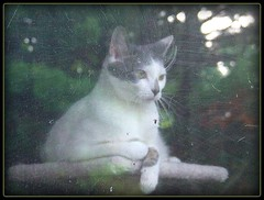 Reflections of life (Kindred Souls) Tags: cats pets reflection closeup chats eyes kitten feline chat soft nap posing kittens dreaming whiskers gato dreams kitties daisy gata meow felines paws gatti cowlick cutecats mittens purrfect kittys feral tubby crazycats petportrait funnycats fluffly rescuedcats catsplaying catsonly onlycats picturesofcats littlekittens justcats fuzzytoes theunforgettablepictures fabulousfelines reflectionlovers editedpets
