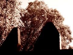 fronde, Milo (Etna) (der Wanderer) Tags: sepia foglie alberi etna boschi parcodelletna