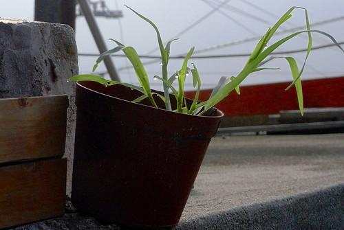 plants-003