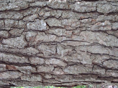 DesignM.ag Bark Texture - 4