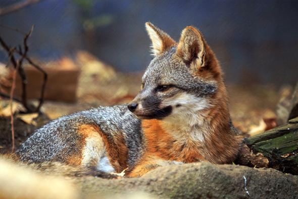 080109_fox