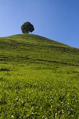 The lonely tree (Don Campanaro) Tags: sky tree canon eos natura erba cielo matteo albero prato 1740 collina 30d binda pascolo oberlandbernese 1agosto wwwmatteobindacom krauchtahl