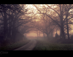Misty path (kerto.co.uk) Tags: autumn trees light sky orange mist grass misty fog canon eos path bare foggy mysterious 5d canon5d kerto