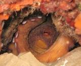 Octopus (gaynorrosier) Tags: volunteers octopus wreck barracuda costabrava seagrass lescala posidonia projectaware marineresearch marineconservation ecodive ecodivers kennaecodiving