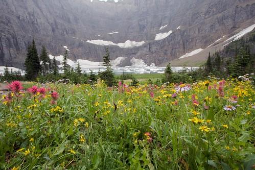 Iceberg Lake -- Glacier National Park