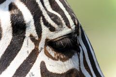 rimmel (squarzenegger) Tags: abigfave d700 veterinarifotografi spiritofphotography squarzenegger sigmaapo150500mmdgoshsm