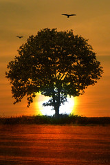 contemplation (AlicePopkorn) Tags: sunset tree nature birds photoshop creativity singing buddhist christian creativecommons present meditation moment awareness spiritual prayers contemplation tinaturner alicepopkorn peakofsummer regulacurti dechenshakdagsay